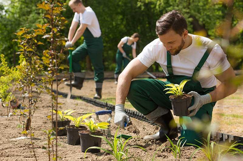 Tree Planting Rockingham