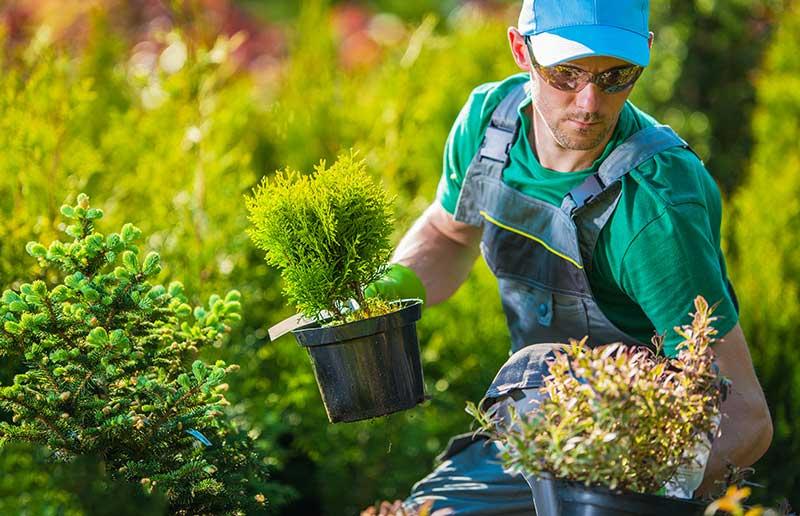 Garden Maintenance Perth