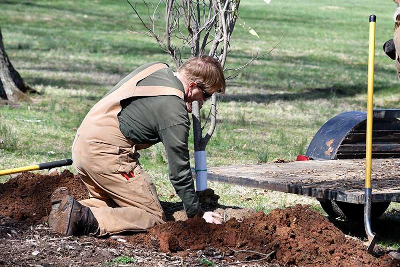 Tree Planting Mandurah